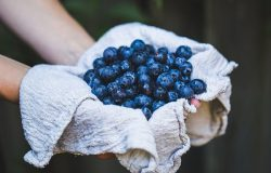"""<img src =""""blueberries.jpg"""" alt =""""foods to eat to lose weight"""">"""