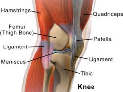 "<img src=""knee diagram.jpg"" alt=""what's the best running shoes for bad knees""/>"